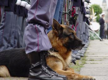 A citizen of Varna took the first place in a contest with police dogs