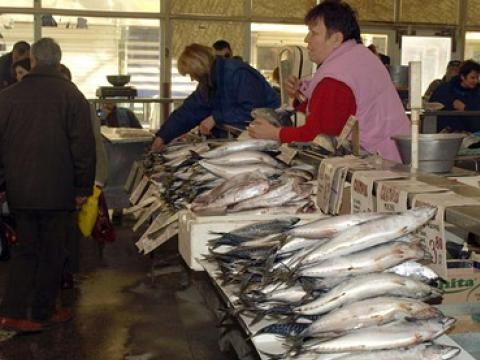 100 kilos of free fish for the poor on Nikulden